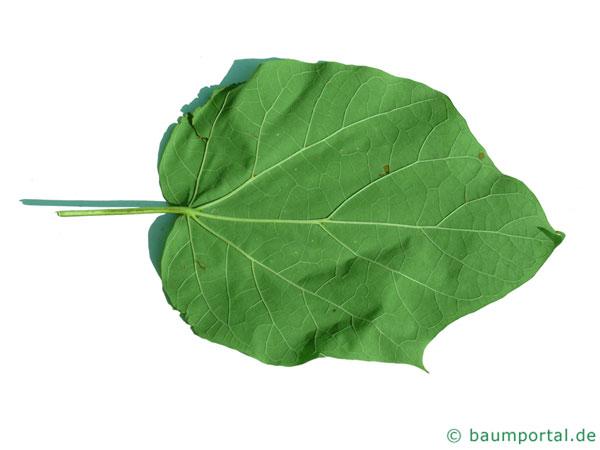 kleinblütiger Trompetenbaum (Catalpa ovata) Blatt Unterseite