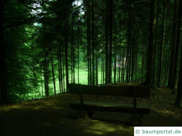 Fichte Wald Bank