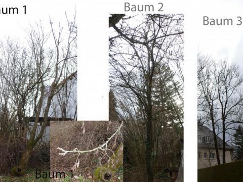 Baum-1-3.jpg