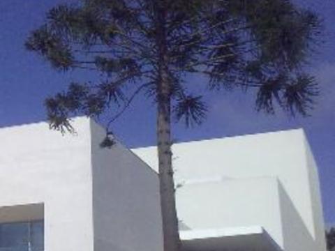 Baum_Caldas_da_Reinha.png
