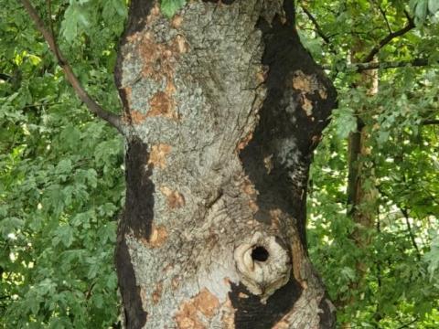 Baum_krank.jpg