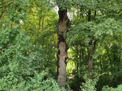 Baum_krank_2.jpg