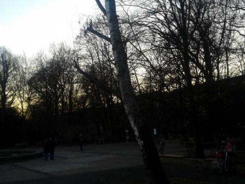 Birke_Neptunbrunnen.jpg