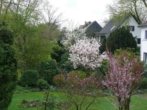 magnolien-1.jpg